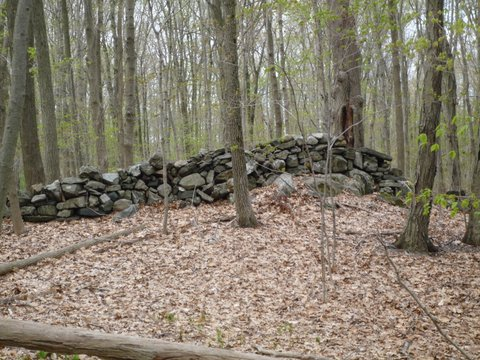 Stone wall on orange trail, Hunt-Parker Sanctuary, Westchester County, NY