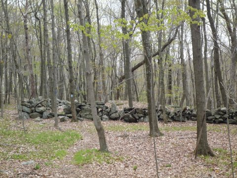 Stone wall, blue trail, Hunt-Parker Sanctuary, Westchester County, NY
