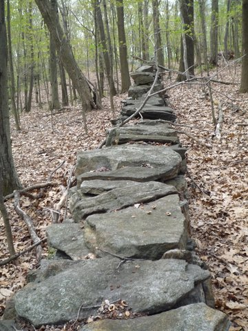 Stone wall, Yellow Trail, Mt. Holly Sanctuary, Westchester County, NY