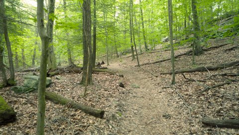 Trail, Mianus River Gorge, Westchester County, NY