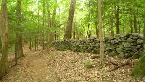 Stone wall, Mianus River Gorge, Westchester County, NY