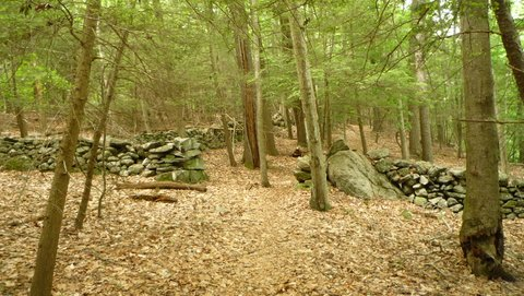 Stone walls, Mianus River Gorge, Westchester County, NY