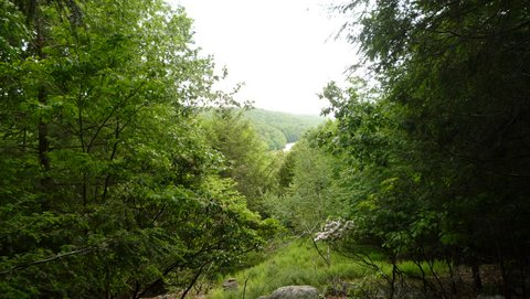 Mianus River Gorge, Westchester County, NY