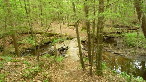 Tributary to Havemeyer Falls, Mianus River Gorge, Westchester County, NY