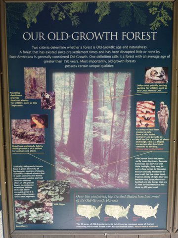 Old-growth forest poster, Mianus River Gorge, Westchester County, NY