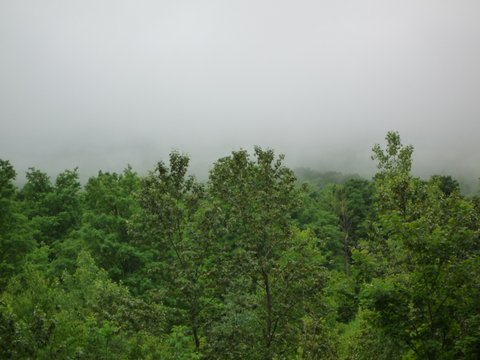 Foggy day at Money Brook Trail, Mt. Greylock State Reservation, MA