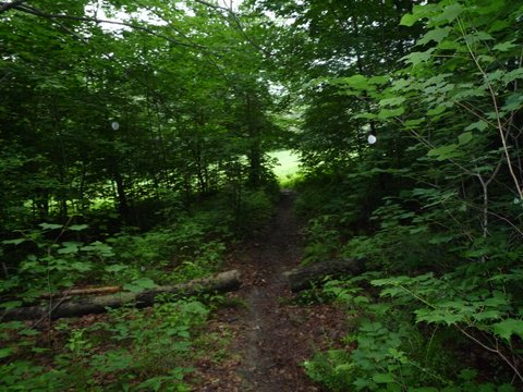 Haley Farm Trail, Mt. Greylock State Reservation, MA