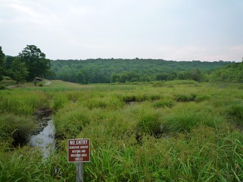 Wetland, Ward Pound Ridge Reservation, Westchester County, NY