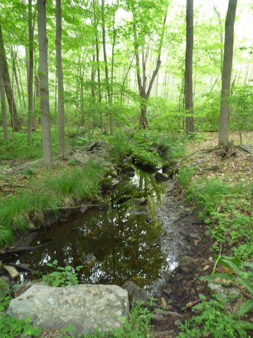 Stream, Ward Pound Ridge Reservation, Westchester County, NY