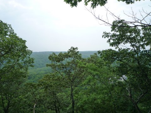 Spy Ridge, Ward Pound Ridge Reservation, Westchester County, NY