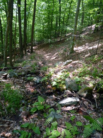 Castle Rock Trail, Ward Pound Ridge Reservation, Westchester County, NY
