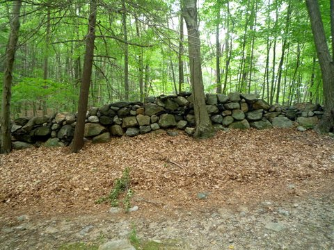 Stone wall, Ward Pound Ridge Reservation, Westchester County, NY