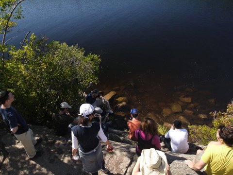 Hikers look at turtle in Surprise Pond, Abram S. Hewitt State Park, NJ