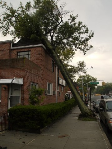 Tree on building, Main St. & Jewel Ave., Kew Gardens Hills, NY