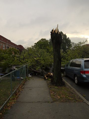 Storm damage, 69th Road, Kew Gardens Hills, NY