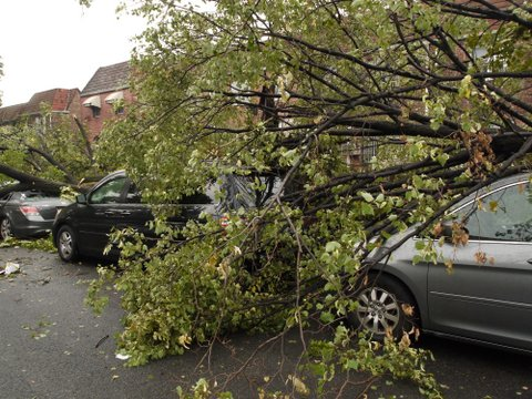 Tree fallen onto car, 69th Road, Kew Gardens Hills, NY
