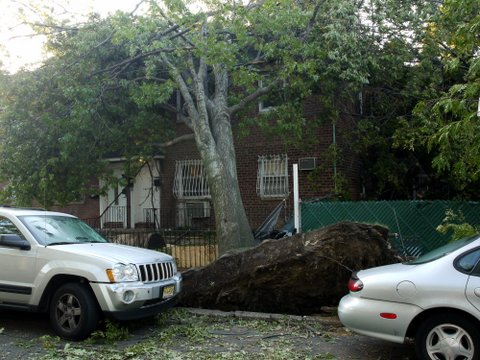 Tree resting on house on 70th Ave., Kew Gardens Hills, NYC