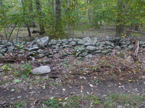 Stone wall on Swamp Trail, Black Rock Forest, Orange County, New York