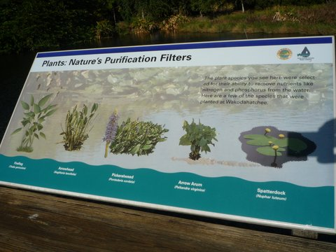 """Plants: Nature's Purification Filters"" Poster, Wakodahatchee Wetlands, Palm Beach County, Florida"