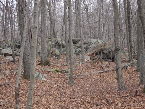 Outcrop, Yellow Trail, Mountain Lakes Park, Westchester County, NY
