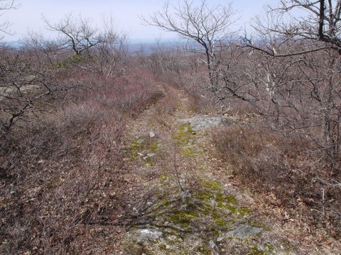 South Taconic Trail, Mt. Washington State Forest, MA