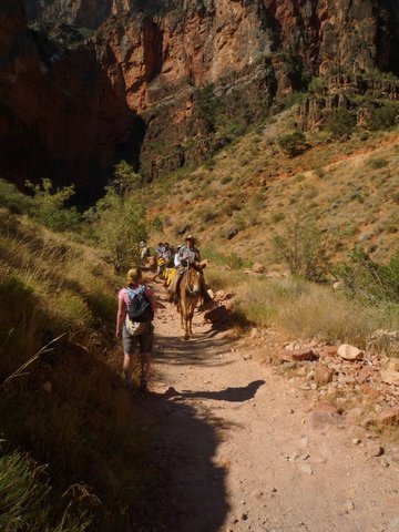 Mule team, Bright Angel Trail, Grand Canyon