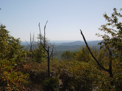Scenic View from Yellow Trail, Norvin Green State Forest, NJ