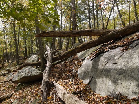 Boulders and Fallen Trees, Norvin Green State Forest, NJ