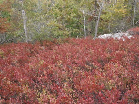 Fall foliage, Norvin Green State Forest, NJ