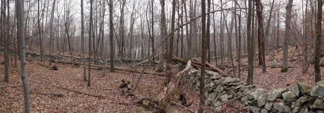 Stone Walls on North Side of Barry Lakes, Wawayanda State Park, NJ