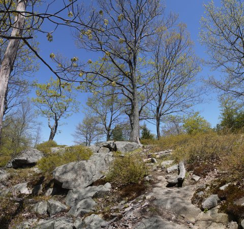 Fingerboard Mountain, Harriman State Park, NY
