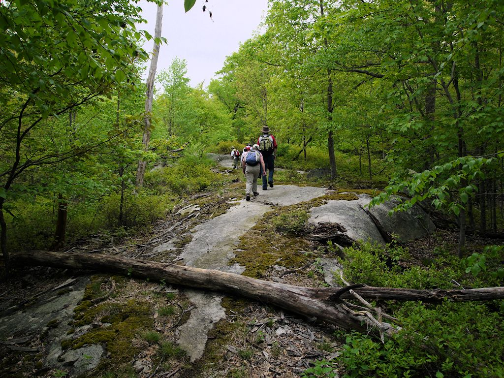 Green Brook Nj >> Norvin Green State Forest, Passaic County, New Jersey