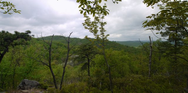 Scenic view, Blue Trail, Norvin Green State Forest, NJ