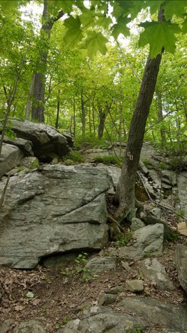 Bare rock on the red trail, Ringwood State Park, NJ