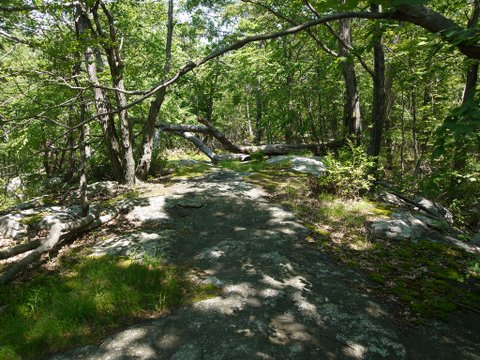 Hiltebeitel Trail, Devil's Den Preserve, Fairfield, CT