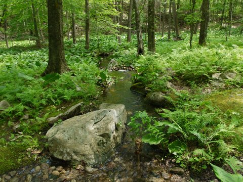 Deer Run Trail, Devil's Den Preserve, Fairfield, CT