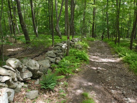 Stone wall on Godfrey Trail, Devil's Den Preserve