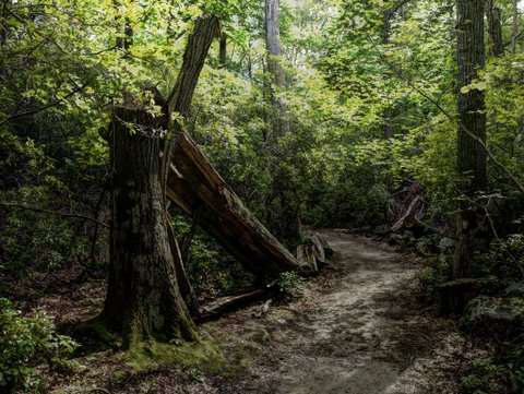 HDR photo of fallen tree