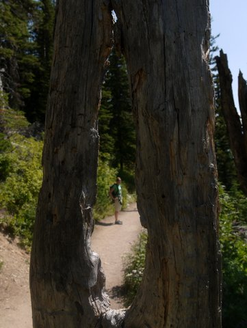 Julie through hole in tree, Iceberg Lake Trail, Glacier National Park, Montana