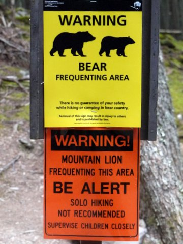 Bear and Mountain Lion Warning Sign, Avalanche Lake Trail, Glacier National Park, Montana
