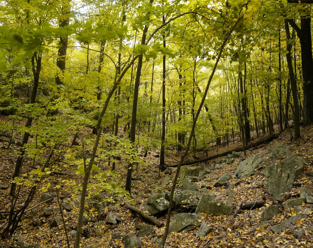 sterling forest Sterling forest state park comprises 21,93508 acres of nearly pristine natural refuge amidst of one of the nation's most densely populated areas, a remarkable piece of woodland, a watershed.