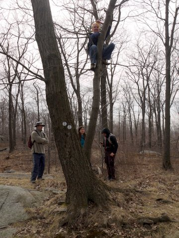Climbing a Tree, with Bored Witnesses