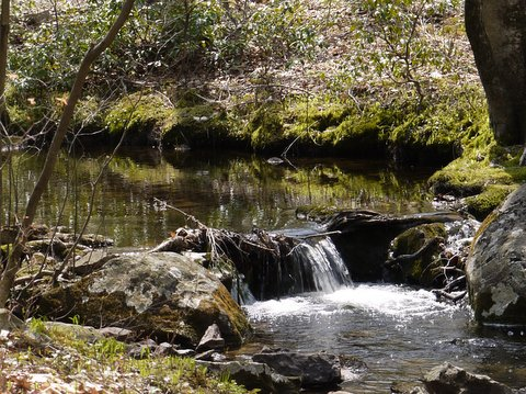 Stony Brook, Stokes State Forest, NJ