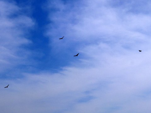 Birds Circling, Stokes State Forest, NJ