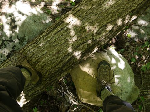 Climbing over fallen tree, Highlands Trail, Tranquility Ridge County Park, Passaic County, NJ