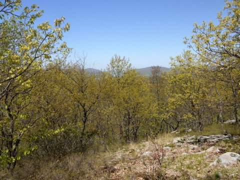 View from Denning Hill, Appalachian Trail, Putnam County, NY