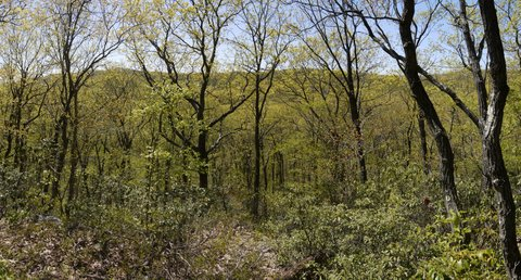 View from Canopus Hill, Appalachian Trail, Putnam County, NY
