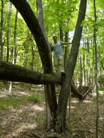 Climbing a fallen tree on the Appalachian Trail, Orange County, NY