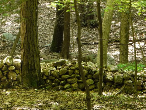 Stone wall on the Appalachian Trail, Orange County, NY