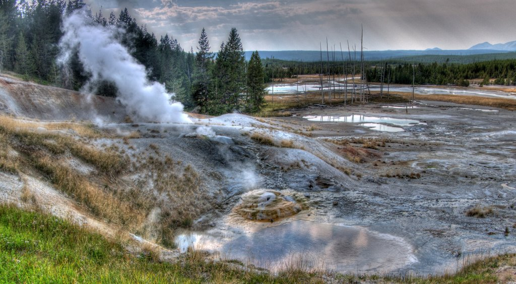 Ledge Geyser, Norris Geyser Basin, Yellowstone National Park, Wyoming